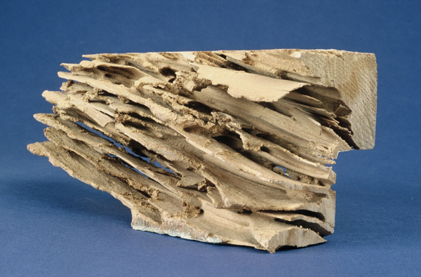 batijournal bois anciens bois neufs lutte contre les termites batijournal. Black Bedroom Furniture Sets. Home Design Ideas