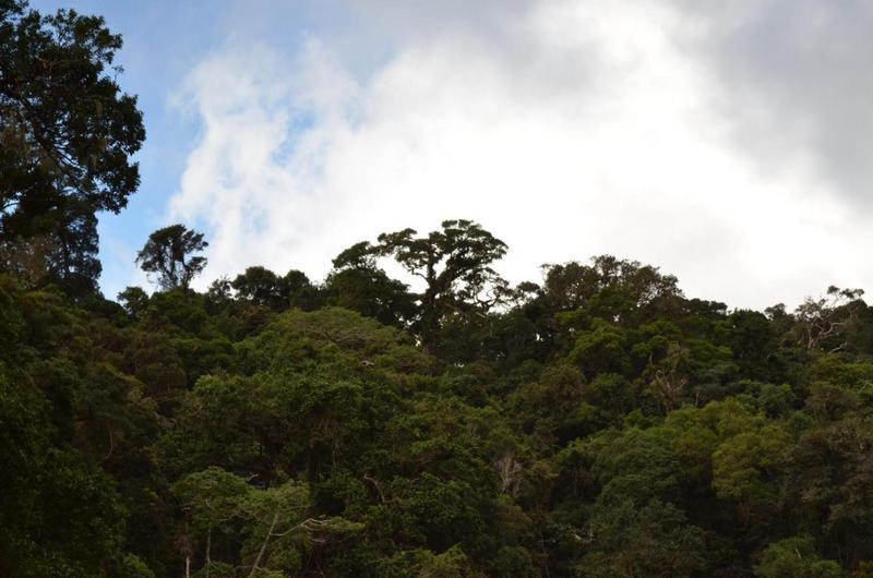 le-changement-climatique-altere-les-capacites-de-stockage-du-co2-des-forets-tropicales_lightbox