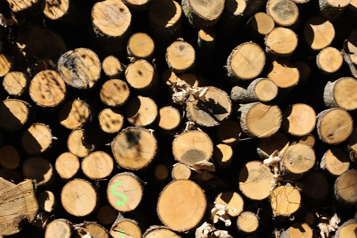 Le bois, l'énergie la moins chère pour se chauffer