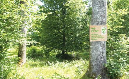 PEFC systeme de certification forestiere